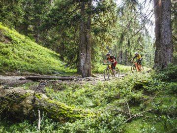 Mountainbiken am Wurzel Trail